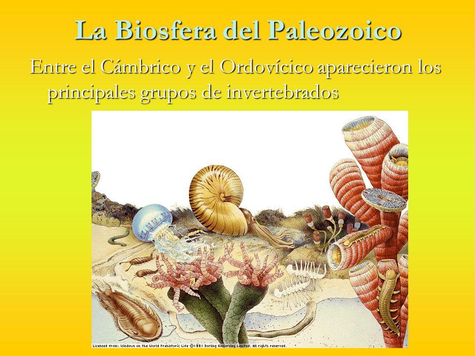 La biosfera del Paleozoico En el Ordovícico surgieron los agnatos.