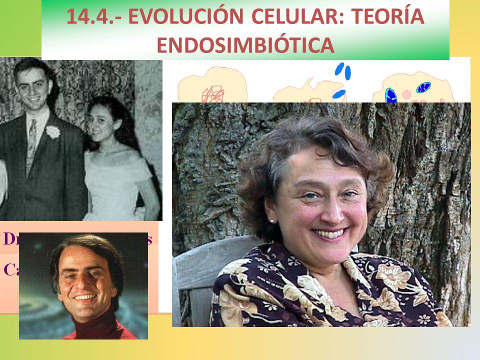 14.4.- EVOLUCIÓN CELULAR: TEORÍA ENDOSIMBIÓTICA