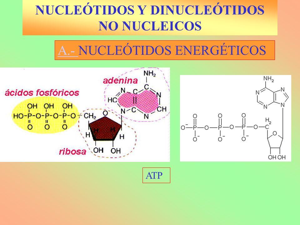 A.- A.- NUCLEÓTIDOS ENERGÉTICOS ATP NUCLEÓTIDOS Y DINUCLEÓTIDOS NO NUCLEICOS