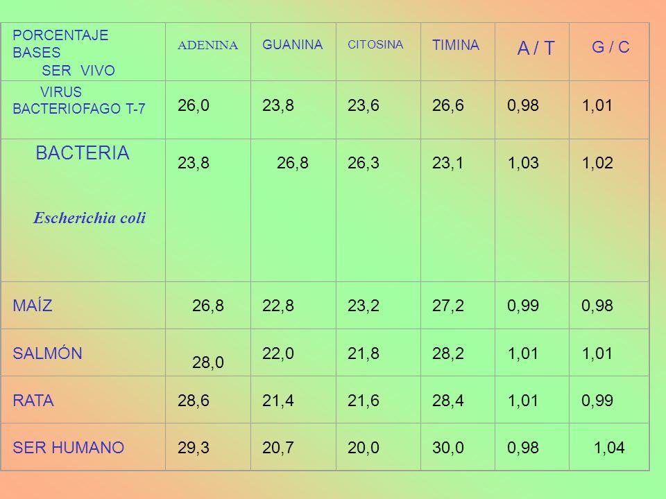 PORCENTAJE BASES SER VIVO ADENINA GUANINA CITOSINA TIMINA A / T G / C VIRUS BACTERIOFAGO T-7 26,0 23,8 23,6 26,6 0,98 1,01 BACTERIA Escherichia coli 2