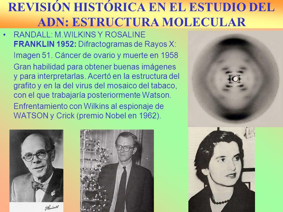 REVISIÓN HISTÓRICA EN EL ESTUDIO DEL ADN: ESTRUCTURA MOLECULAR RANDALL: M.WILKINS Y ROSALINE FRANKLIN 1952: Difractogramas de Rayos X: Imagen 51. Cánc