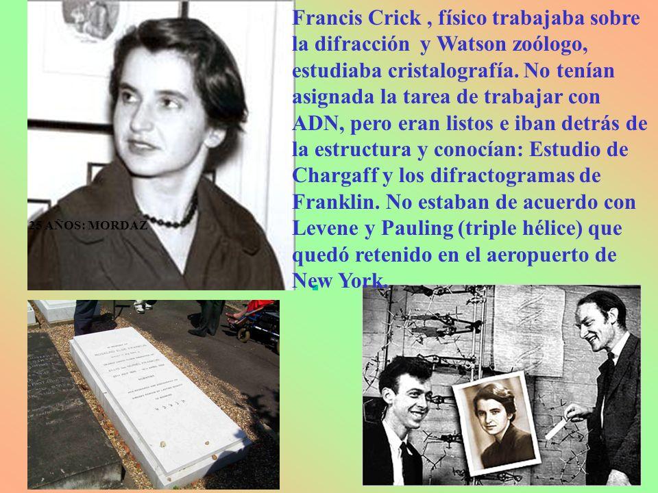 25 AÑOS: MORDAZ Francis Crick, físico trabajaba sobre la difracción y Watson zoólogo, estudiaba cristalografía. No tenían asignada la tarea de trabaja