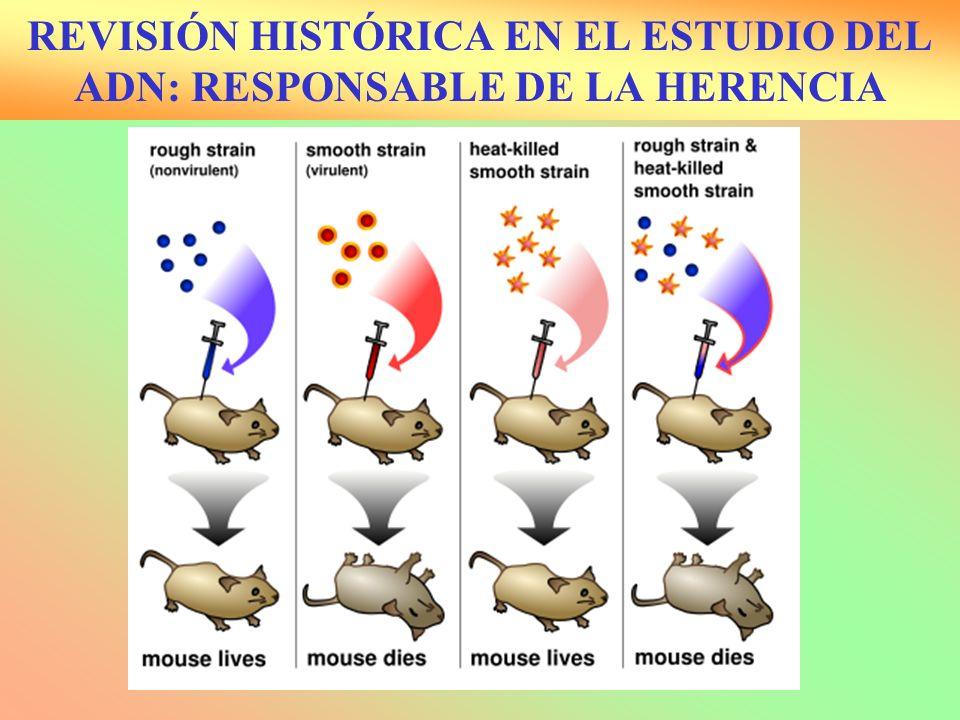 REVISIÓN HISTÓRICA EN EL ESTUDIO DEL ADN: RESPONSABLE DE LA HERENCIA