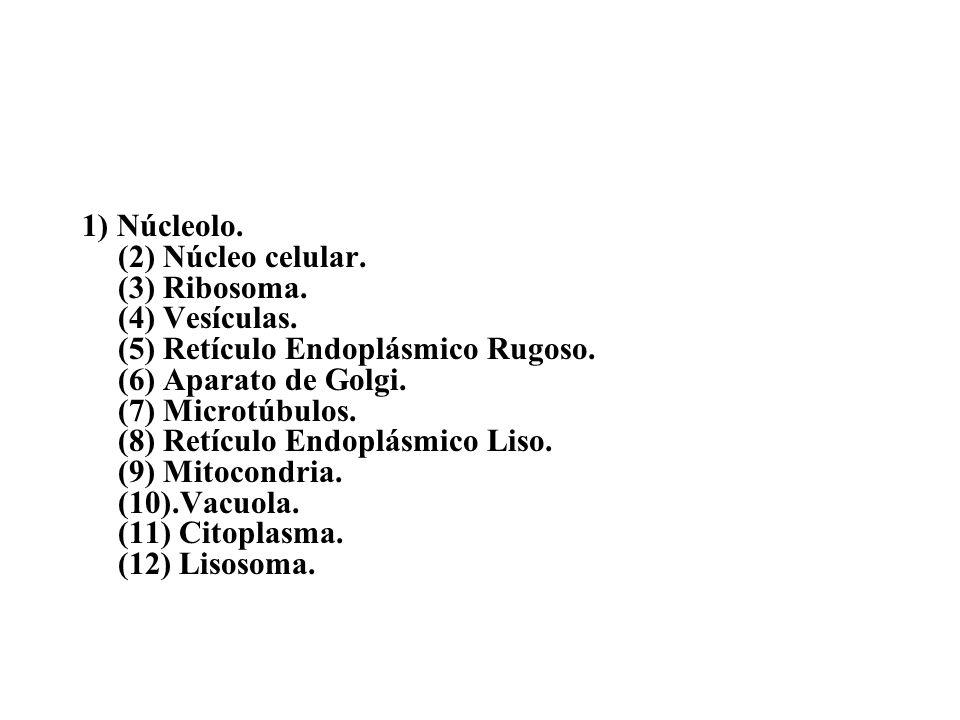 1) Núcleolo. (2) Núcleo celular. (3) Ribosoma. (4) Vesículas. (5) Retículo Endoplásmico Rugoso. (6) Aparato de Golgi. (7) Microtúbulos. (8) Retículo E