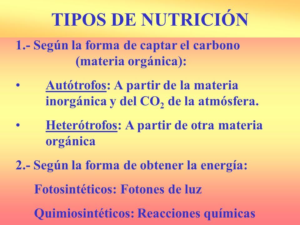 1.- Según la forma de captar el carbono (materia orgánica): Autótrofos: A partir de la materia inorgánica y del CO 2 de la atmósfera.