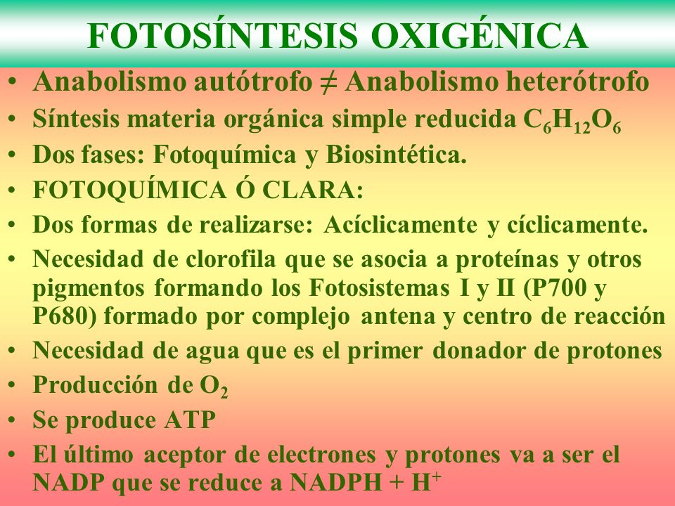 Anabolismo autótrofo Anabolismo heterótrofo Síntesis materia orgánica simple reducida C 6 H 12 O 6 Dos fases: Fotoquímica y Biosintética.