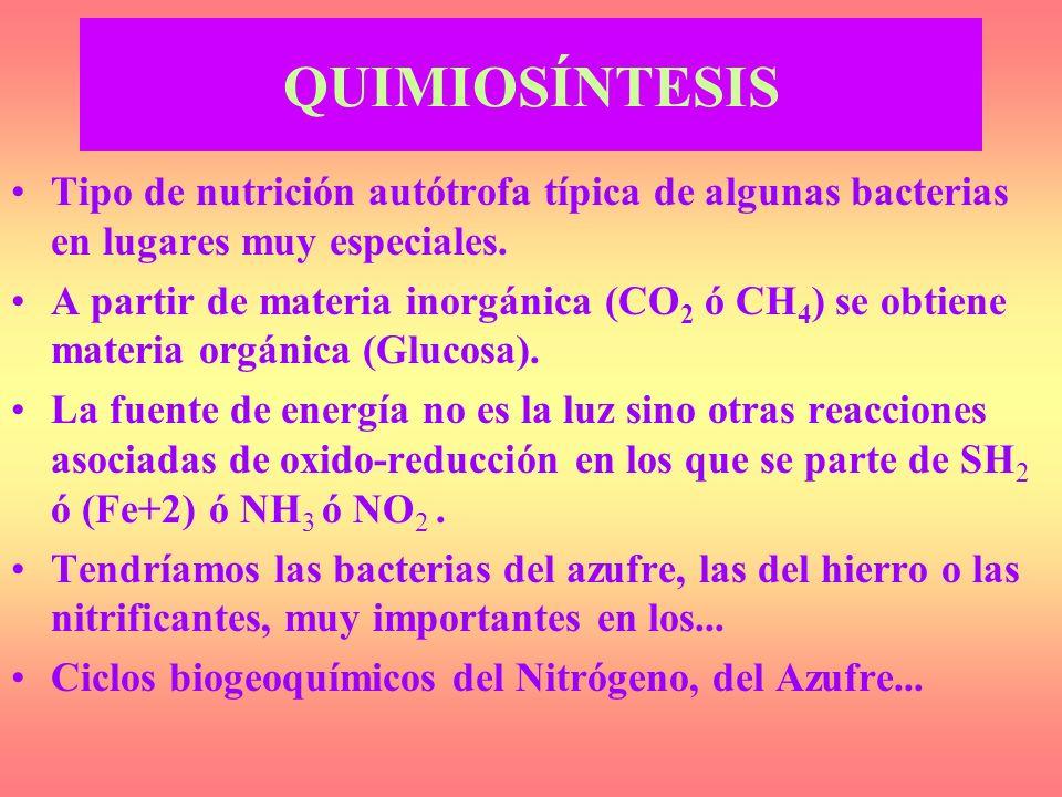 QUIMIOSÍNTESIS Tipo de nutrición autótrofa típica de algunas bacterias en lugares muy especiales.