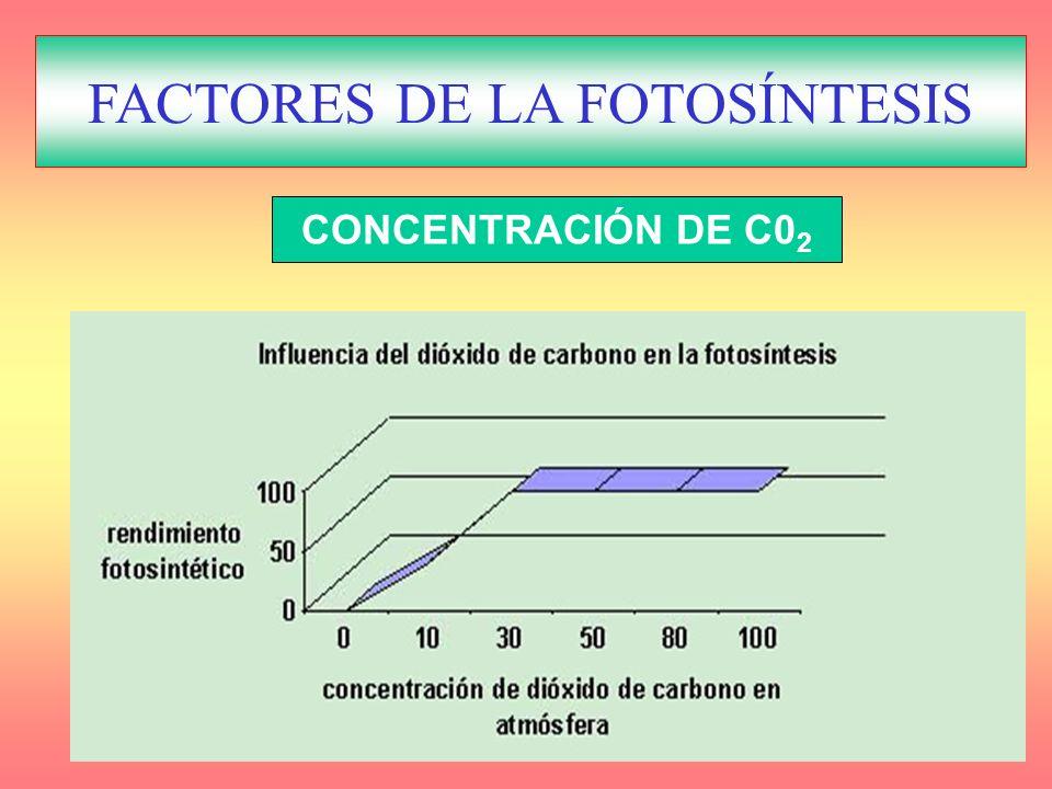 FACTORES REGULADORES DE LA FOTOSÍNTESIS CONCENTRACIÓN DE C0 2 FACTORES DE LA FOTOSÍNTESIS