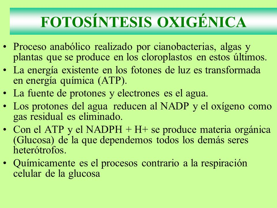 Factores reguladores de la Fotosíntesis TEMPERATURA FACTORES DE LA FOTOSÍNTESIS