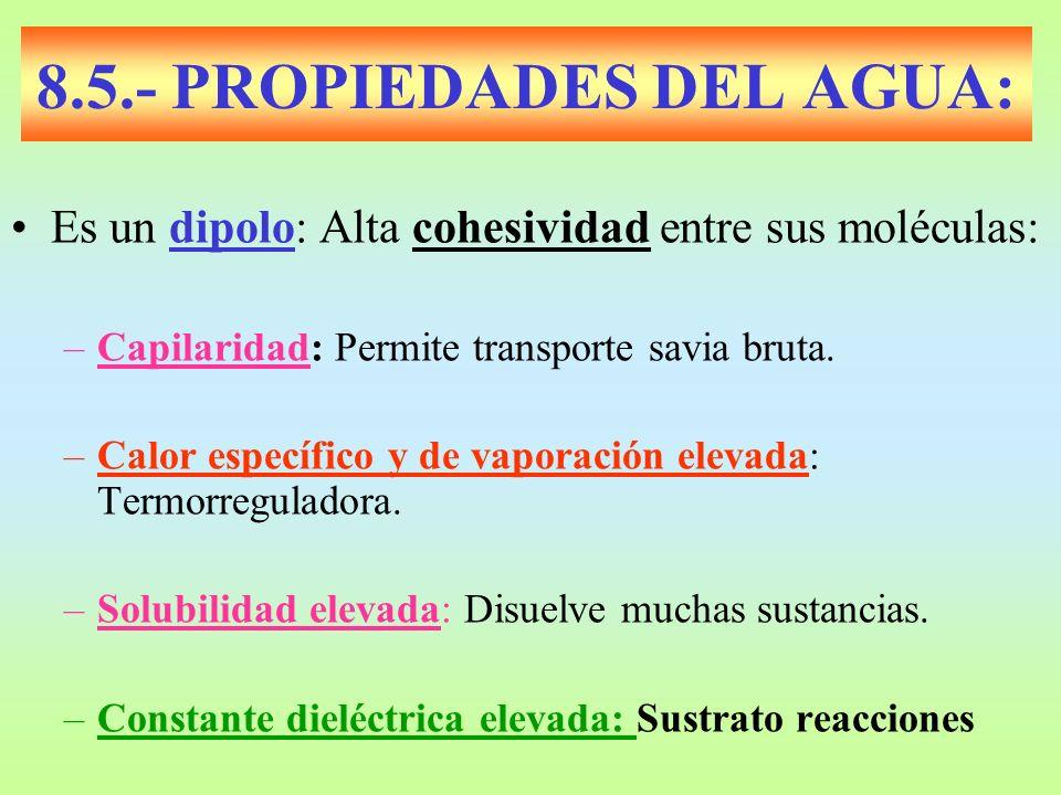 8.5.- PROPIEDADES DEL AGUA: Es un dipolo: Alta cohesividad entre sus moléculas: –Capilaridad: Permite transporte savia bruta. –Calor específico y de v