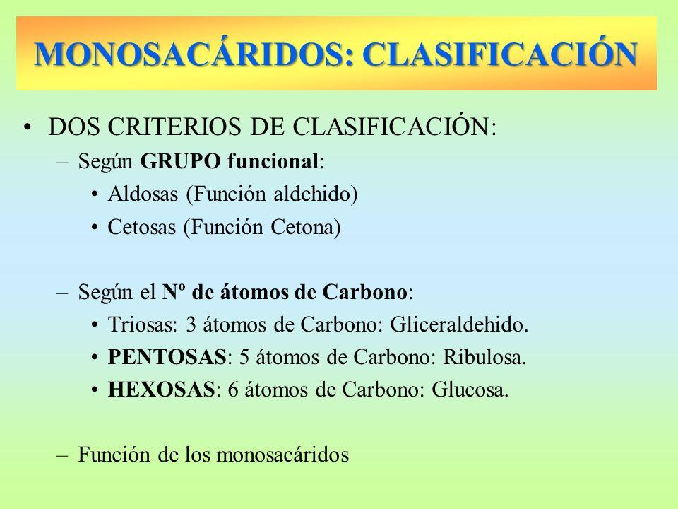 MONOSACÁRIDOS: CLASIFICACIÓN DOS CRITERIOS DE CLASIFICACIÓN: –Según GRUPO funcional: Aldosas (Función aldehido) Cetosas (Función Cetona) –Según el Nº