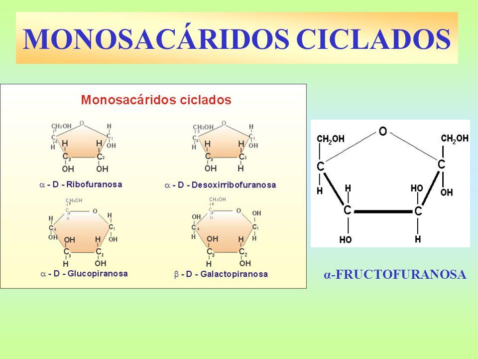 MONOSACÁRIDOS CICLADOS α-FRUCTOFURANOSA