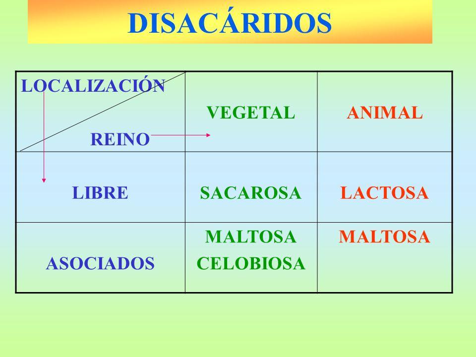 DISACÁRIDOS LOCALIZACIÓN REINO VEGETALANIMAL LIBRESACAROSALACTOSA ASOCIADOS MALTOSA CELOBIOSA MALTOSA