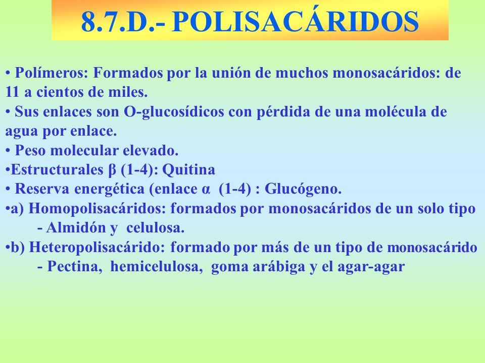 8.7.D.- POLISACÁRIDOS Polímeros: Formados por la unión de muchos monosacáridos: de 11 a cientos de miles. Sus enlaces son O-glucosídicos con pérdida d