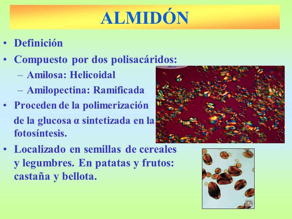ALMIDÓN Definición Compuesto por dos polisacáridos: –Amilosa: Helicoidal –Amilopectina: Ramificada Proceden de la polimerización de la glucosa α sinte
