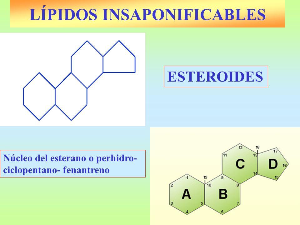 LÍPIDOS INSAPONIFICABLES ESTEROIDES Núcleo del esterano o perhidro- ciclopentano- fenantreno