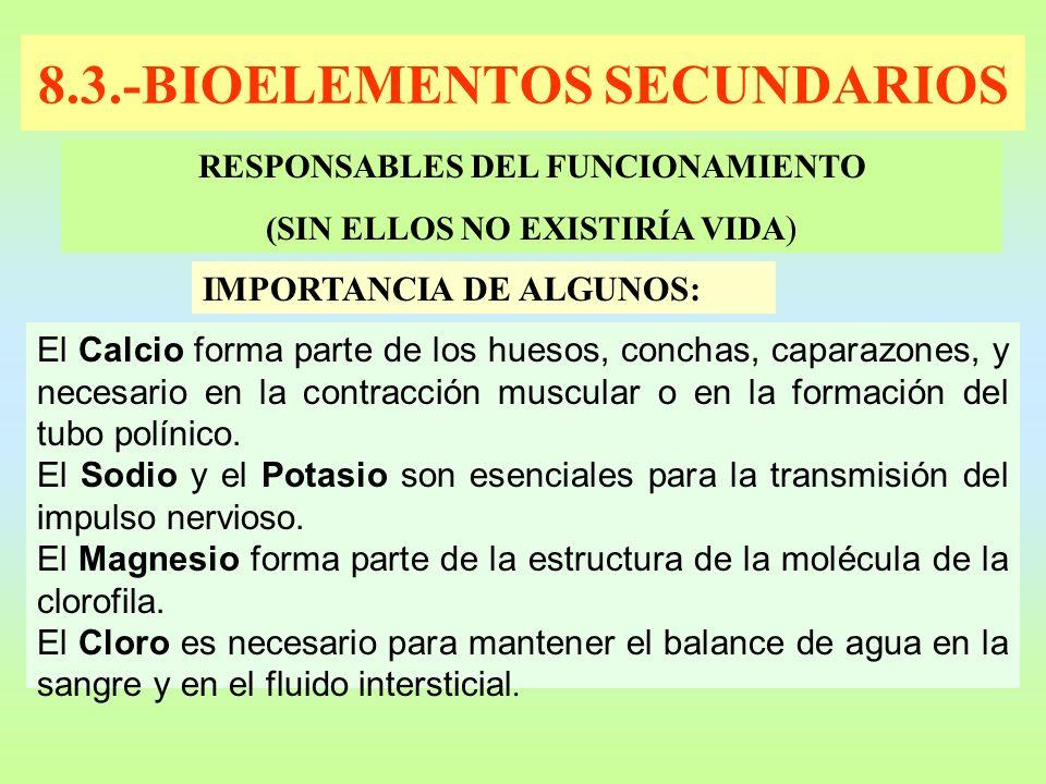 8.3.-BIOELEMENTOS SECUNDARIOS RESPONSABLES DEL FUNCIONAMIENTO (SIN ELLOS NO EXISTIRÍA VIDA ) IMPORTANCIA DE ALGUNOS: El Calcio forma parte de los hues