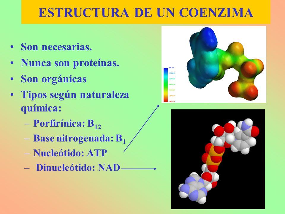 ESTRUCTURA DE UN COENZIMA Son necesarias. Nunca son proteínas. Son orgánicas Tipos según naturaleza química: –Porfirínica: B 12 –Base nitrogenada: B 1