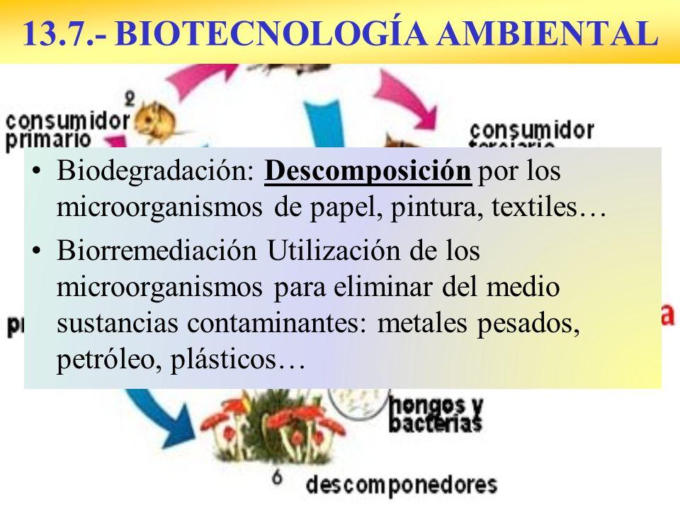 13.7.- BIOTECNOLOGÍA AMBIENTAL Biodegradación: Descomposición por los microorganismos de papel, pintura, textiles… Biorremediación Utilización de los microorganismos para eliminar del medio sustancias contaminantes: metales pesados, petróleo, plásticos…