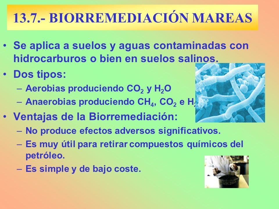 13.7.- BIORREMEDIACIÓN MAREAS Se aplica a suelos y aguas contaminadas con hidrocarburos o bien en suelos salinos.