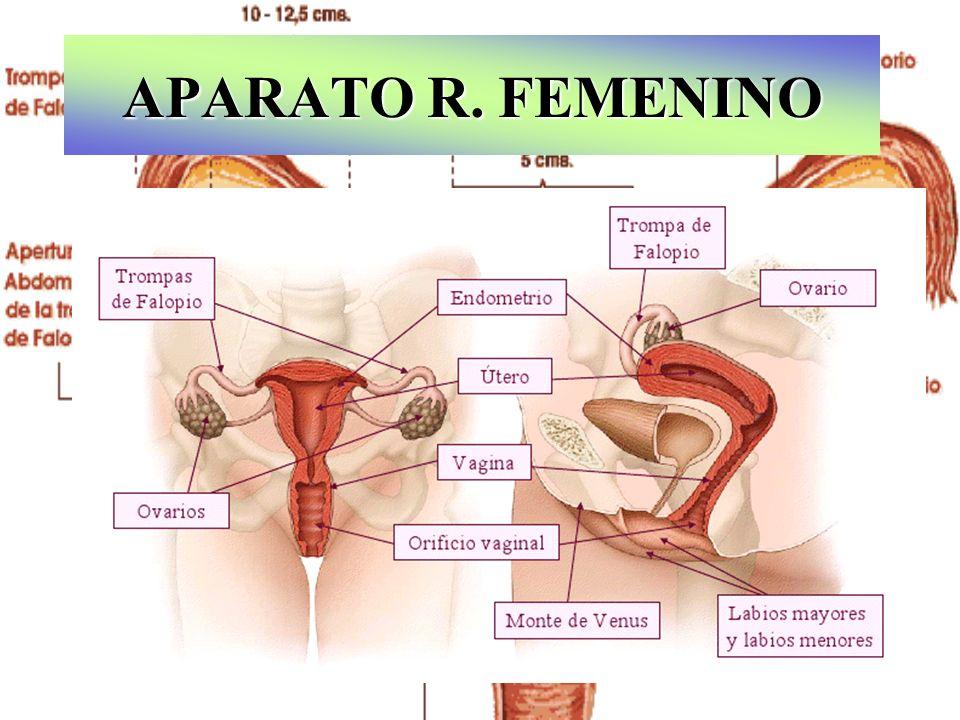 APARATO R. FEMENINO