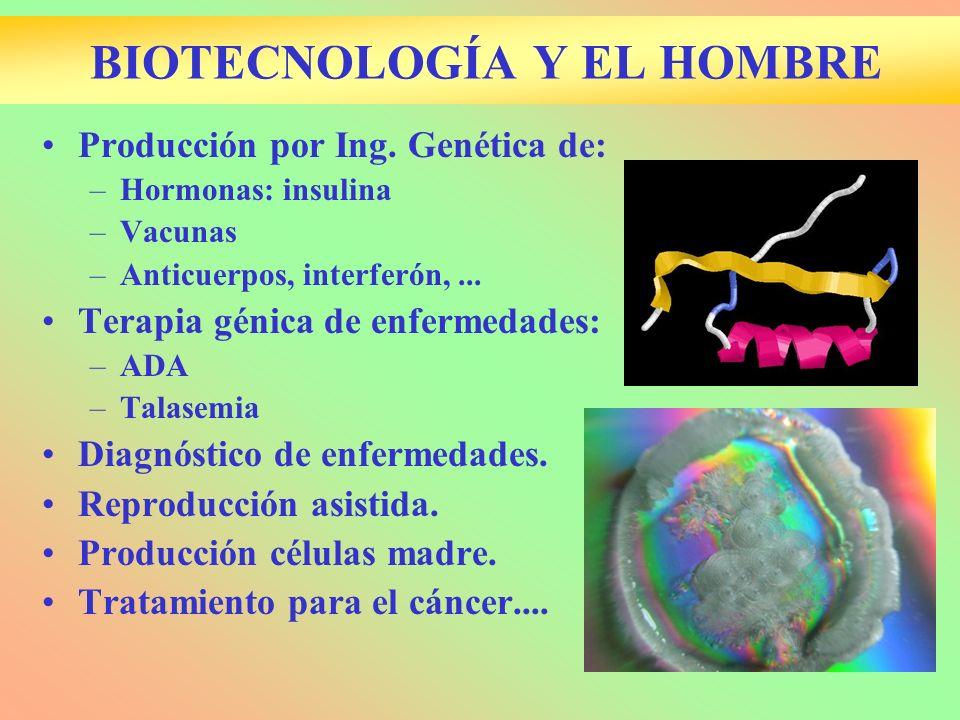 BIOTECNOLOGÍA Y EL HOMBRE Producción por Ing. Genética de: –Hormonas: insulina –Vacunas –Anticuerpos, interferón,... Terapia génica de enfermedades: –