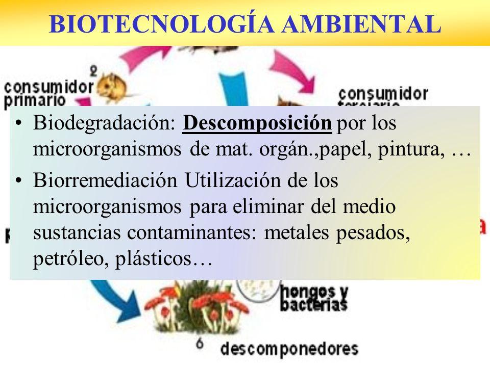 Biodegradación: Descomposición por los microorganismos de mat. orgán.,papel, pintura, … Biorremediación Utilización de los microorganismos para elimin