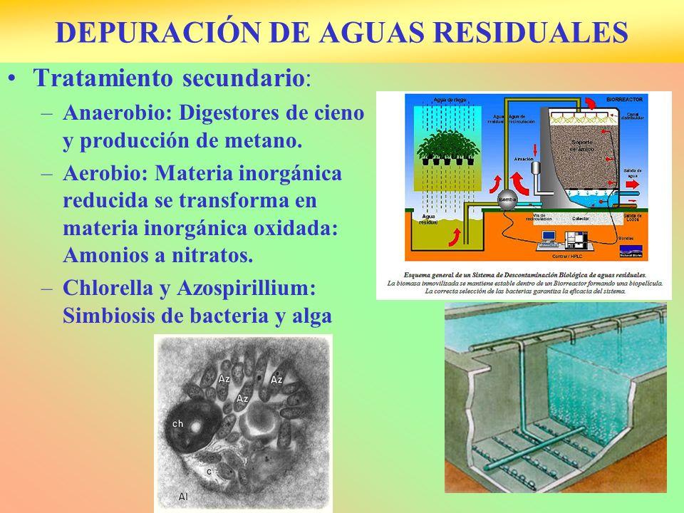 DEPURACIÓN DE AGUAS RESIDUALES Tratamiento secundario: –Anaerobio: Digestores de cieno y producción de metano. –Aerobio: Materia inorgánica reducida s