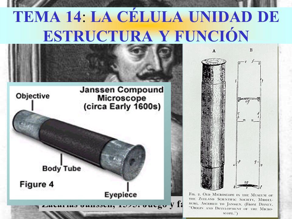 TEMA 14: LA CÉLULA UNIDAD DE ESTRUCTURA Y FUNCIÓN Zacarias Janssen, 1595: Juego y falsificar monedas