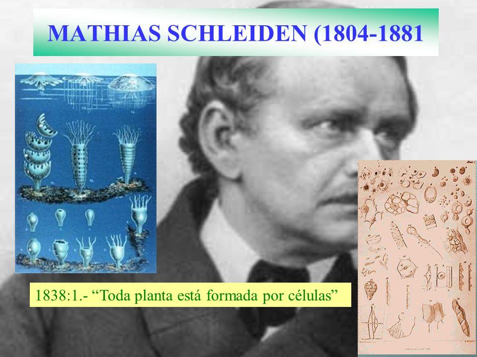 MATHIAS SCHLEIDEN (1804-1881 1838:1.- Toda planta está formada por células