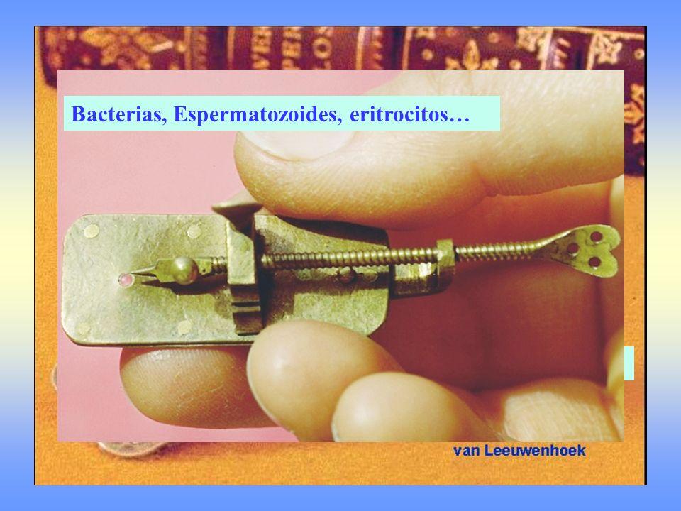 Construyó 260 Eran dos lupas combinadas Bacterias, Espermatozoides, eritrocitos…