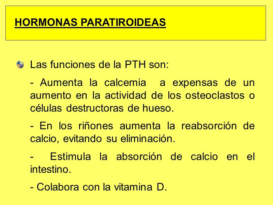 Las funciones de la PTH son: - Aumenta la calcemia a expensas de un aumento en la actividad de los osteoclastos o células destructoras de hueso. - En