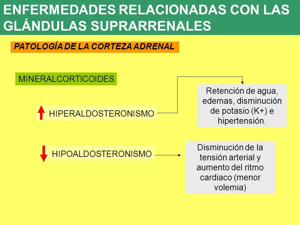 UD 7 8. ENFERMEDADES ENDOCRINAS PATOLOGÍA DE LA CORTEZA ADRENAL Retención de agua, edemas, disminución de potasio (K+) e hipertensión. HIPERALDOSTERON