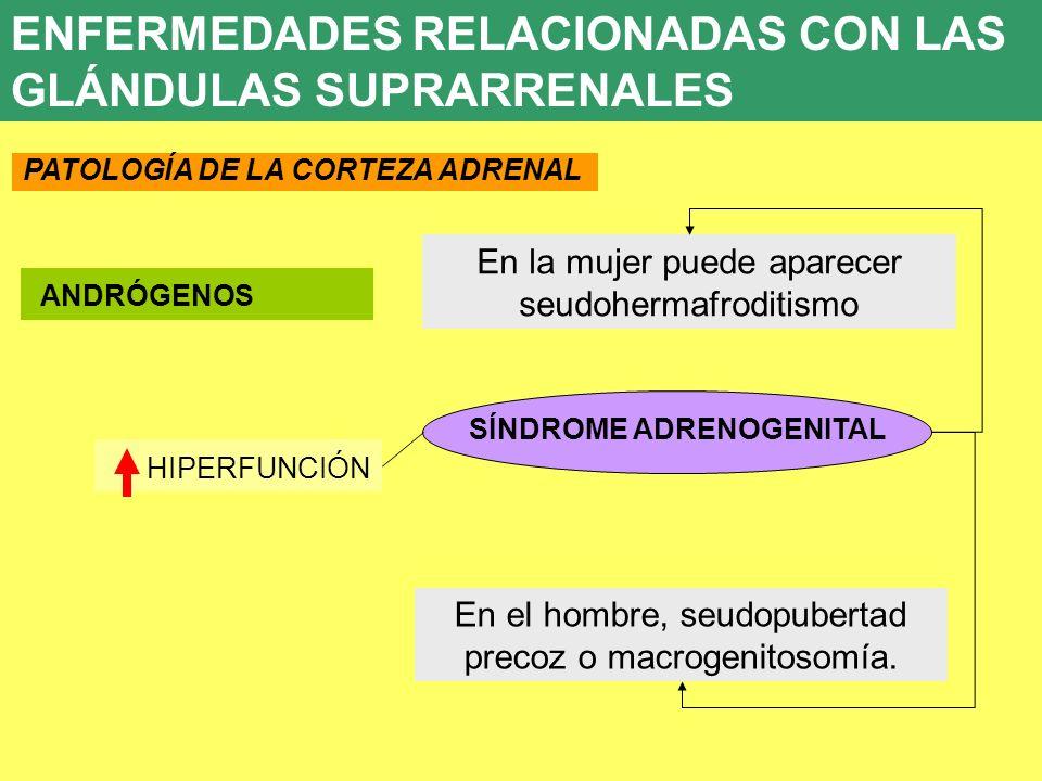 UD 7 HIPERFUNCIÓN 8. ENFERMEDADES ENDOCRINAS ANDRÓGENOS SÍNDROME ADRENOGENITAL En la mujer puede aparecer seudohermafroditismo En el hombre, seudopube
