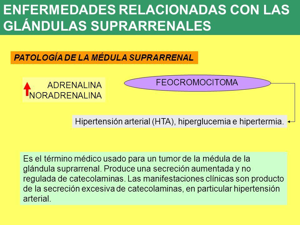 UD 7 8. ENFERMEDADES ENDOCRINAS PATOLOGÍA DE LA MÉDULA SUPRARRENAL FEOCROMOCITOMA ADRENALINA NORADRENALINA Hipertensión arterial (HTA), hiperglucemia