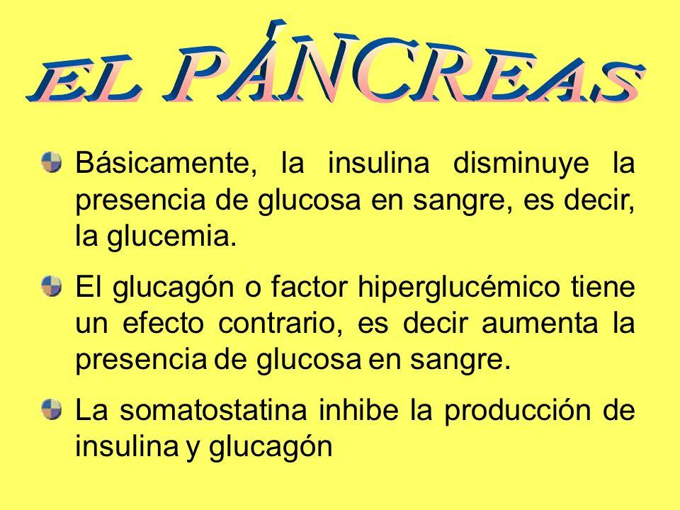 Básicamente, la insulina disminuye la presencia de glucosa en sangre, es decir, la glucemia. El glucagón o factor hiperglucémico tiene un efecto contr
