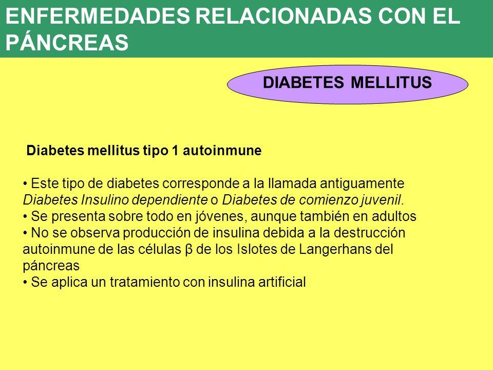 8. ENFERMEDADES ENDOCRINAS 8.5. PATOLOGÍA DEL PÁNCREAS ENDOCRINO DIABETES MELLITUS ENFERMEDADES RELACIONADAS CON EL PÁNCREAS Diabetes mellitus tipo 1