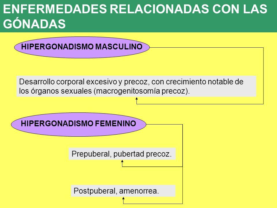 UD 7 8. ENFERMEDADES ENDOCRINAS HIPERGONADISMO MASCULINO Desarrollo corporal excesivo y precoz, con crecimiento notable de los órganos sexuales (macro