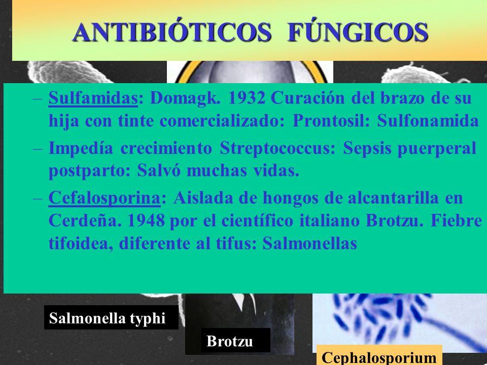 Streptococos Salmonella typhi Gerhard Domagk: Nobel 1939 –Sulfamidas: Domagk. 1932 Curación del brazo de su hija con tinte comercializado: Prontosil: