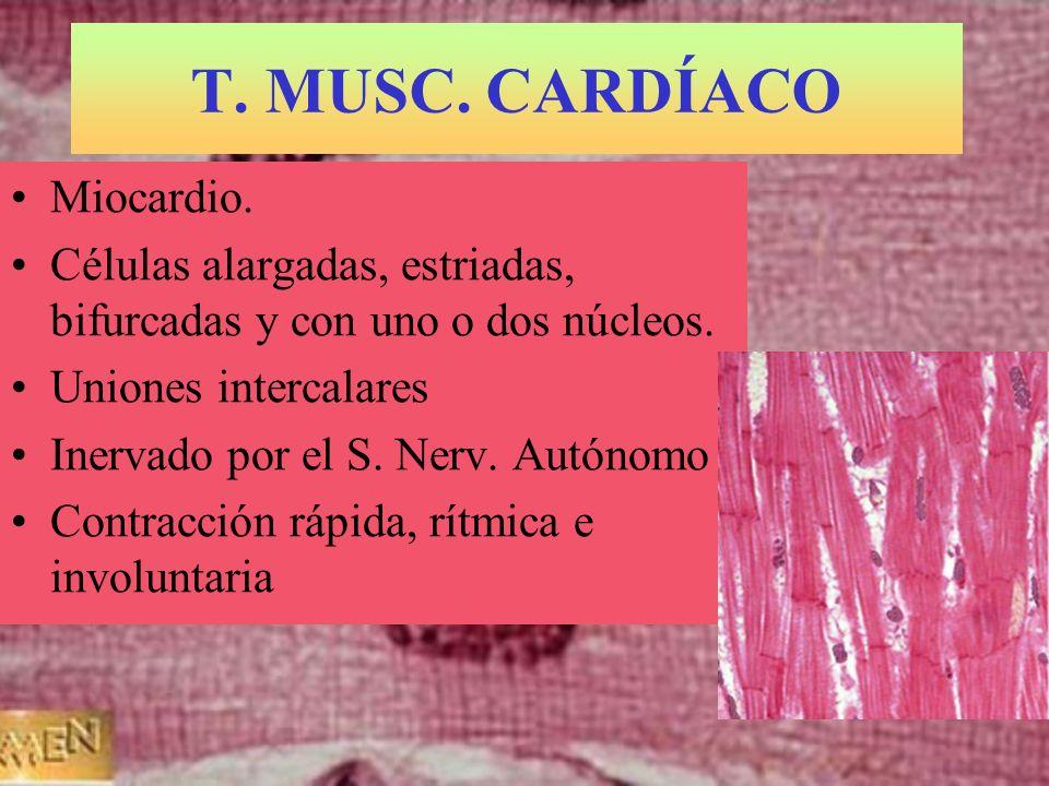 T. MUSC. CARDÍACO Miocardio. Células alargadas, estriadas, bifurcadas y con uno o dos núcleos. Uniones intercalares Inervado por el S. Nerv. Autónomo