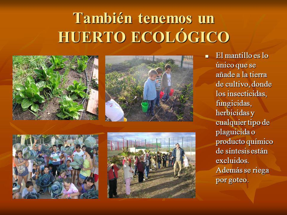 También tenemos un HUERTO ECOLÓGICO El mantillo es lo único que se añade a la tierra de cultivo, donde los insecticidas, fungicidas, herbicidas y cual