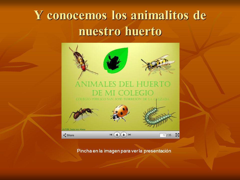 Y conocemos los animalitos de nuestro huerto Pincha en la imagen para ver la presentación