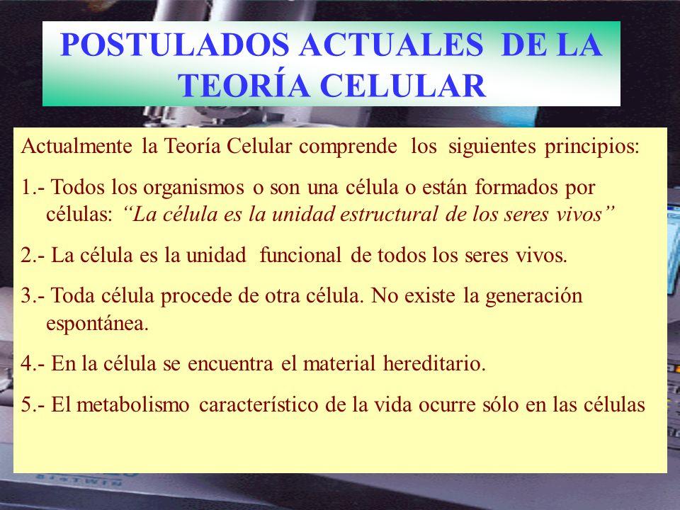 Actualmente la Teoría Celular comprende los siguientes principios: 1.- Todos los organismos o son una célula o están formados por células: La célula es la unidad estructural de los seres vivos 2.- La célula es la unidad funcional de todos los seres vivos.