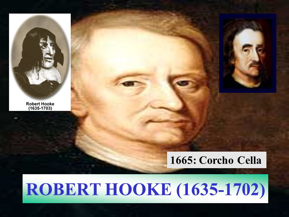 ROBERT HOOKE (1635-1702) 1665: Corcho Cella
