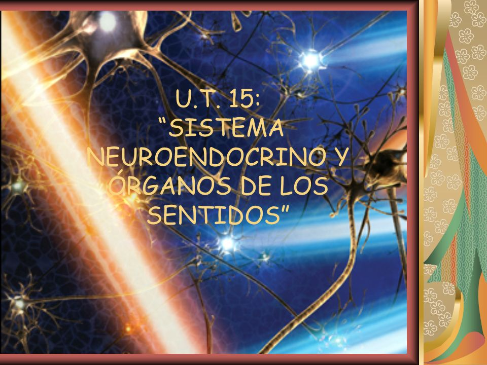 U.T. 15: SISTEMA NEUROENDOCRINO Y ÓRGANOS DE LOS SENTIDOS
