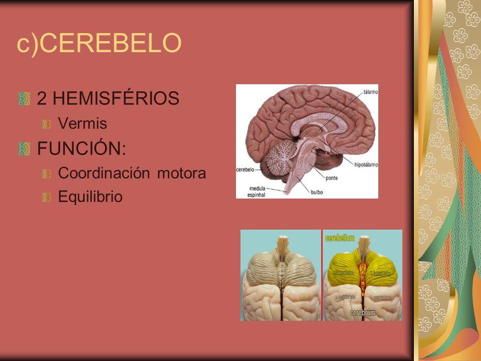 c)CEREBELO 2 HEMISFÉRIOS Vermis FUNCIÓN: Coordinación motora Equilibrio
