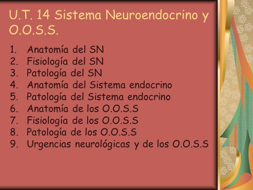 U.T. 14 Sistema Neuroendocrino y O.O.S.S. 1.Anatomía del SN 2.Fisiología del SN 3.Patología del SN 4.Anatomía del Sistema endocrino 5.Patología del Si