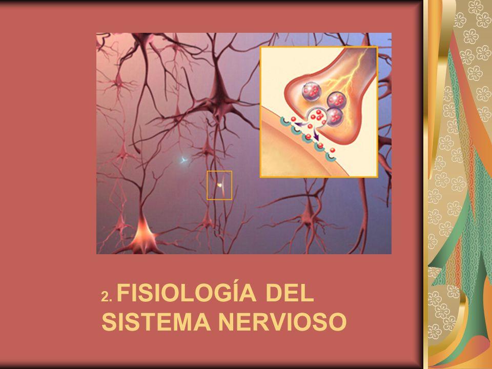 2. FISIOLOGÍA DEL SISTEMA NERVIOSO