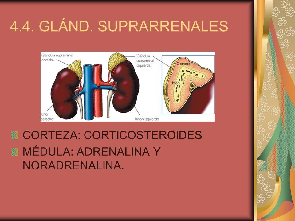 4.4. GLÁND. SUPRARRENALES CORTEZA: CORTICOSTEROIDES MÉDULA: ADRENALINA Y NORADRENALINA.