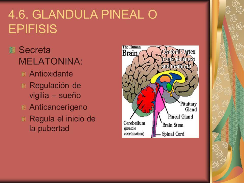 4.6. GLANDULA PINEAL O EPIFISIS Secreta MELATONINA: Antioxidante Regulación de vigilia – sueño Anticancerígeno Regula el inicio de la pubertad